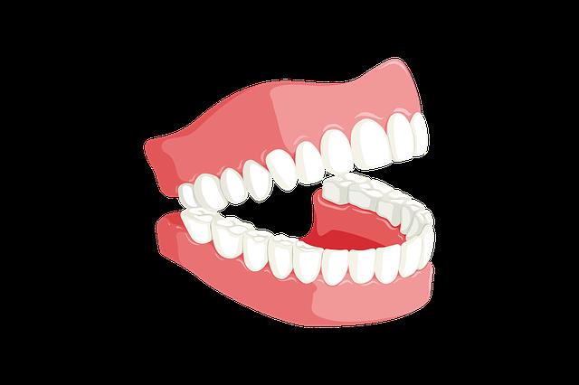 ¿Cuántos dientes tenemos realmente?